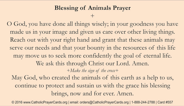 St  Francis Blessing of Animals Prayer Card